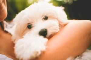 Vier Denkweisen von Tieren, die dich glücklicher machen