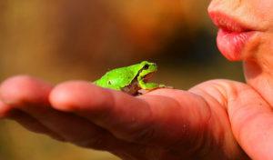 Eat the Frog – so funktioniert das beliebte Prinzip